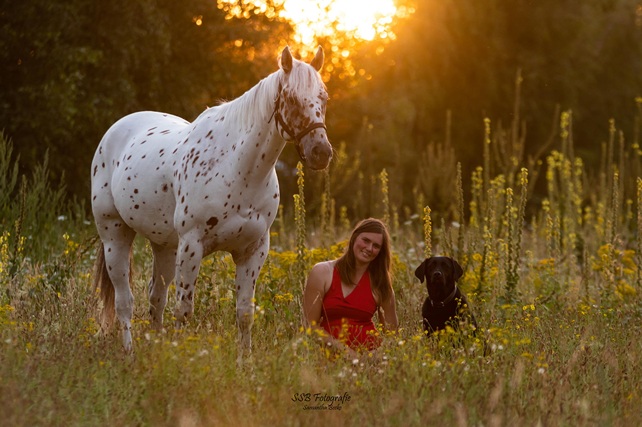 Petra Sallaerts & leni By fitdogs.be